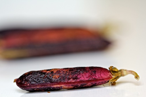a field pea (project: the beauty of ageing)