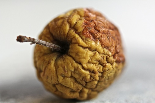 a forest apple found in amsterdam, part of the project 'the beauty of ageing'