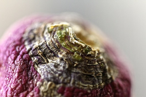 detail of a turnip; part of project: the beauty of ageing